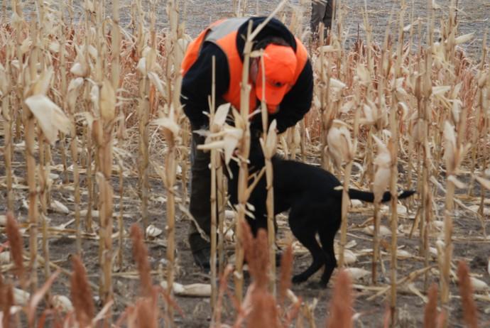 Dog Training South Dakota
